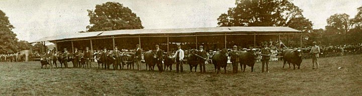 Devon County Agricultural Show in Pilton House Park 1900