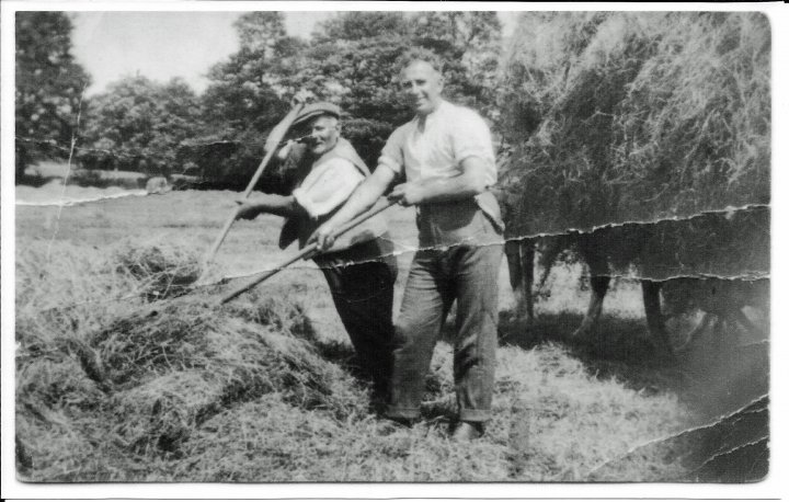 Haymaking on Pathfield in about 1926