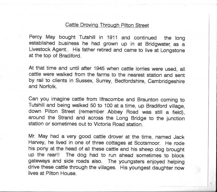 Cattle Droving Through Pilton Street until after World War II