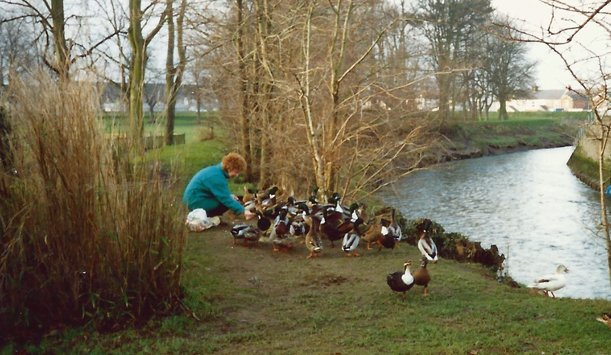 Phyllis Allen feeding the ducks in Pilton Park on the banks of the River Yeo